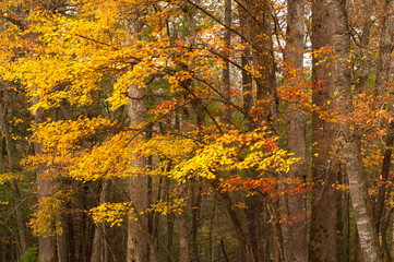Late autumn in Great Smoky Mountains Cades Cove, TN, USA