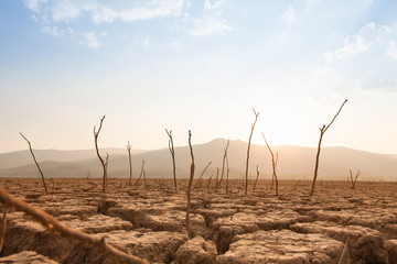 Dead trees on drought and cracked land at dry river or lake, metaphor climate change, global warming and water crisis