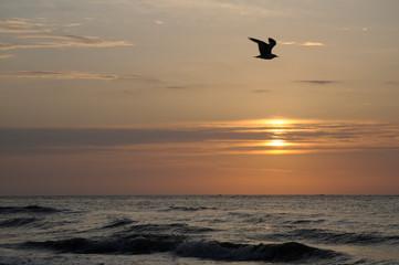 Seagull Silhouette at Hunting Island, NC USA at Sunrise