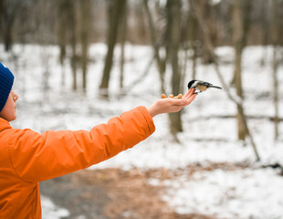 Cropped image of boy hand feeding chickadee in the woods in winter.