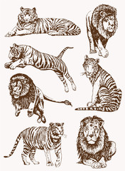 Vintage set of wild lions and tigers,graphical illustration,vector