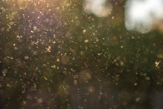 Staub, Pollen und kleine Partikel fliegen durch die Luft im Sonnenschein.
