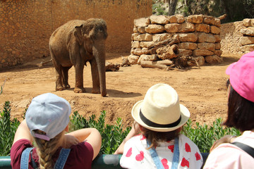 Young Girls Enjoy Observing an Elephant in Zoo Wall mural