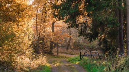 Herbstwald im Sauerland