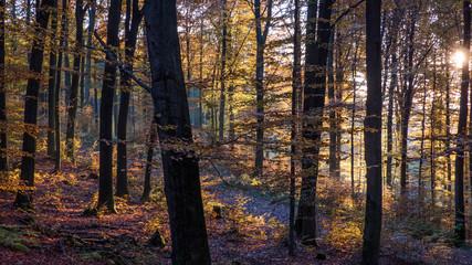 Herbstwald im Abendlicht