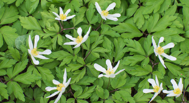 White flower in bloom in spring.