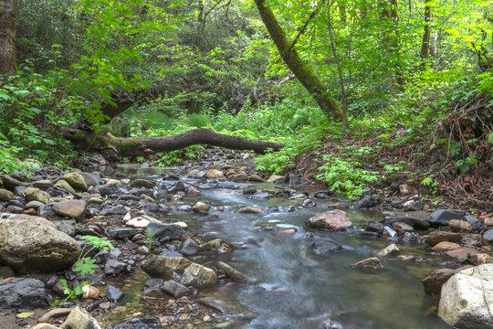 Creek, Los Gatos, California, fallen tree