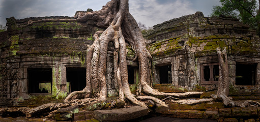 Overgrown Ta Prohm Temple, Angkor, Siem Reap, Cambodia