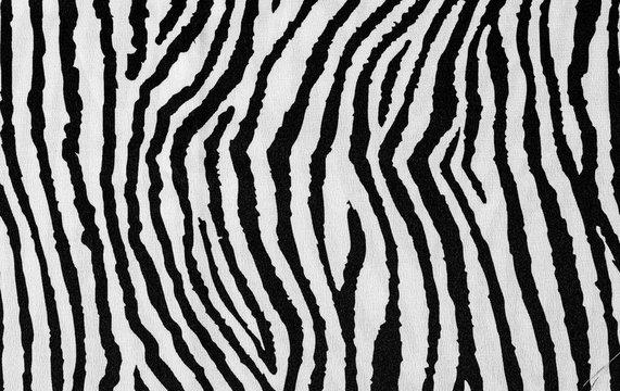 animal zebra skin