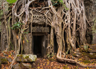 Mystical Overgrown Ta Prohm Temple, Angkor, Cambodia