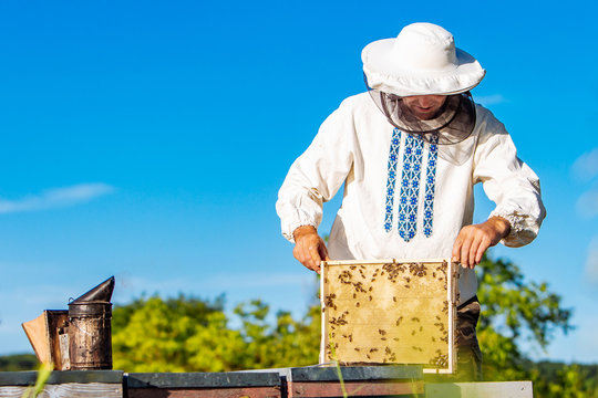 Beekeeper inspecting honeycomb frame at apiary at the summer day. Man working in apiary. Apiculture. Beekeeping concept.