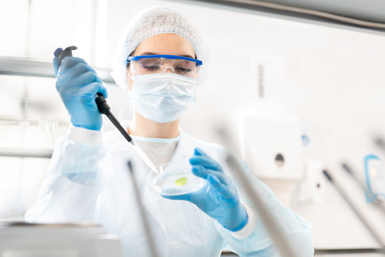Serious busy young female scientist in disposable cap and gloves using dropper while adding sample into petri dish, she studying microbiological sample