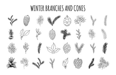 Big set of hand drawn pine, spruce, fir tree branches and cones. Winter plants, mistletoe and holly for Christmas decoration. Vector isolated holiday design elements.