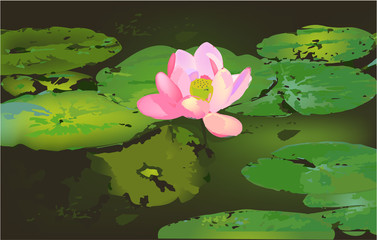 Leaves and Lotus on the water, vector