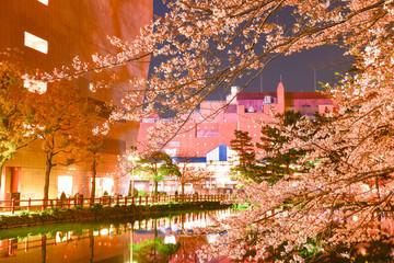 夜の小倉城桜まつり【福岡県】