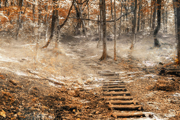 Wooden staircase on a forest path. Hiking trail in the big Crimean canyon, the Crimean peninsula, Krasnodar region, Russia