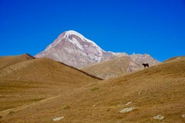 A horse standing in front of Mount Kazbegi, Georgia