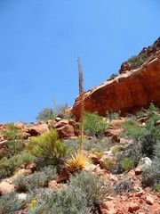 Plant life on show in the Grand Canyon