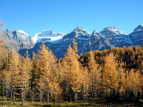 Larch Valley during fall with snowy peaks in background