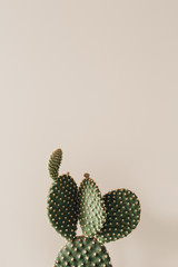 Photo sur Aluminium Cactus Closeup of cactus on beige background.