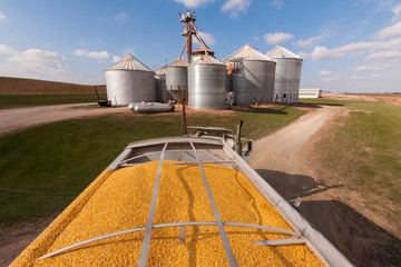 Grain truck loaded with corn at grain dryer and bin complex during corn harvest, near Nerstrand; Minnesota, United States of America
