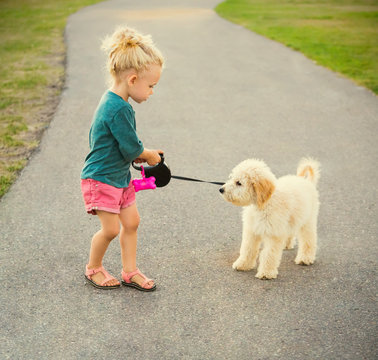 A little girl walking her Labradoodle in a park when he decides to become stubborn and uncooperative; Spruce Grove, Alberta, Canada