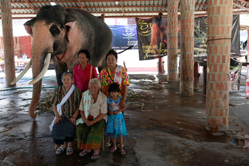 """A family have a photo taken with Plai Ekachai, 33, who will become first """"white"""" elephant to be discovered under the reign of King Rama X, also known as Maha Vajiralongkorn, in Maha Sarakham"""