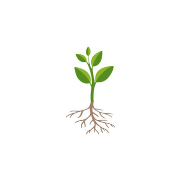 Green plant sprout isolated on white background