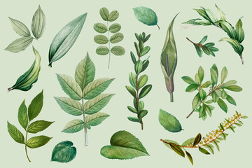 Plant leaves collection Wall mural