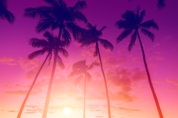 Tropical island sunset with silhouette of palm trees, hot summer day vacation background, golden sky with sun setting over horizon