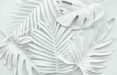 Obraz Collection of tropical leaves,foliage plant in white color.Abstract leaf decoration design background - fototapety do salonu