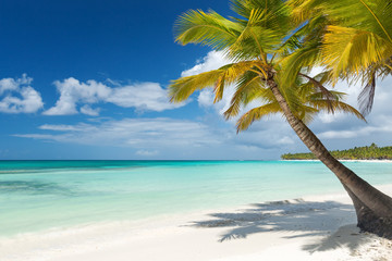 White sandy beach with sea and palms