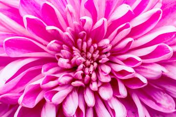 Foto op Canvas Macrofotografie Pink Flower