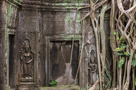 Vegetation growing over the ruins of the beautiful temple of Ta Prohm, Siem Reap, Cambodia