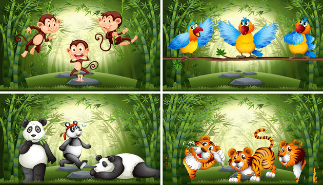 Set of animal in bamboo forest