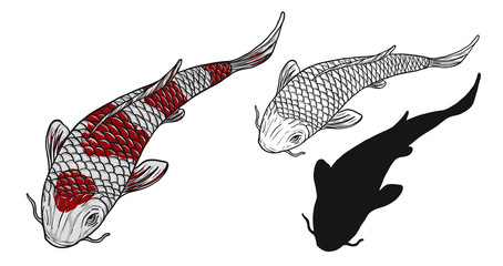 Koi fish vector tattoo by hand drawing.Beautiful fish on white background.Black and white graphics design art highly detailed in line art style.Carp fish for tattoo or wallpaper.