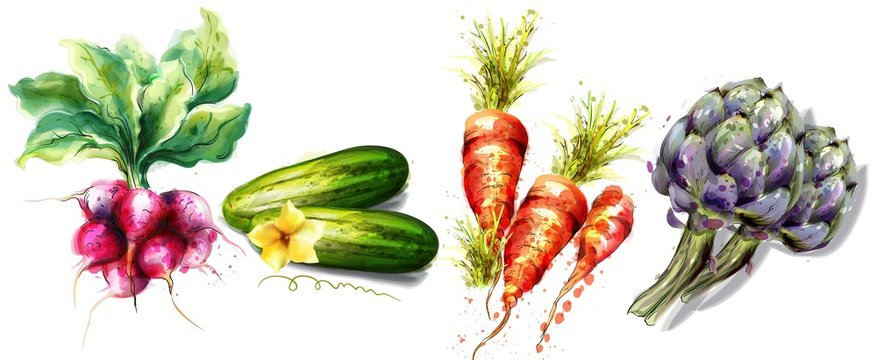 Radish, cucumber, carrots and artichoke Vegetables Vector watercolor isolated on whites
