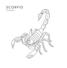 Scorpion linear illustration or tattoo sketch hand drawn