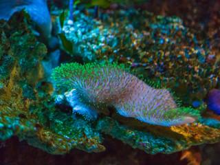 Fish and corals in the aquarium