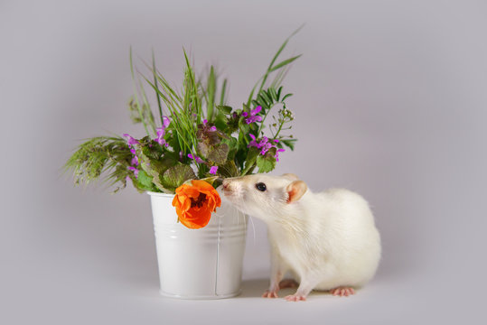 White decorative rat next to the flowers. Mouse on light background