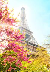 Eiffel Tower spring photo, Paris