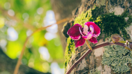 Sunlit Burgundy Colored Orchid