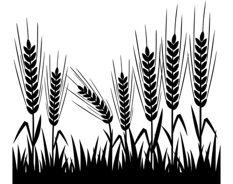 Wheat. Silhouette of wheat field. Natural vector illustration.