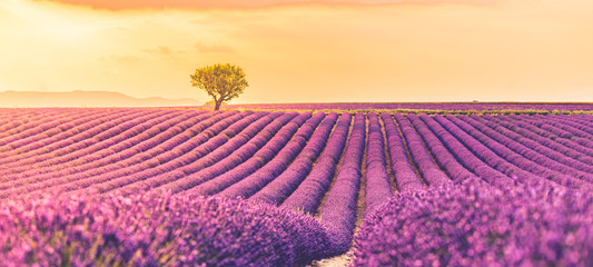 Panoramic view of French lavender field at sunset. Sunset over a violet lavender field in Provence, France, Valensole. Summer nature landscape. Beautiful summer nature scene Wall mural
