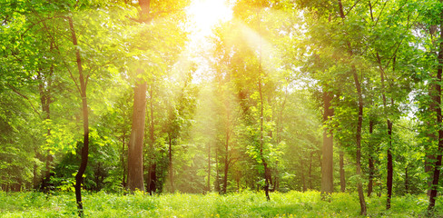Bright sunny day in park. The sunrays illuminate green grass and trees.