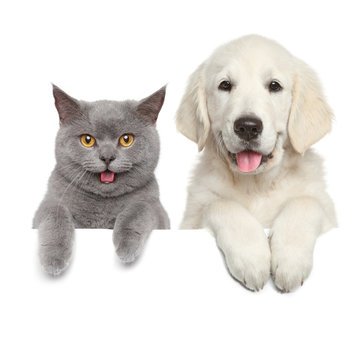 Cat and dog over white banner