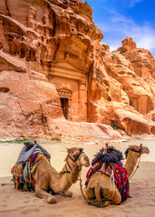 Wall Mural - Sandstone temple and camels in Little Petra, ancient city of Petra, Jordan