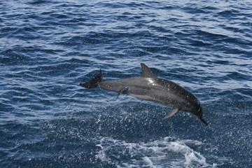 Papiers peints Dauphins dolphin in water