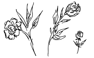 Hand Drawn  Illustrations Of Abstract Set Of Roses Flower Isolated on White. Hand Drawn Sketch of a Flower