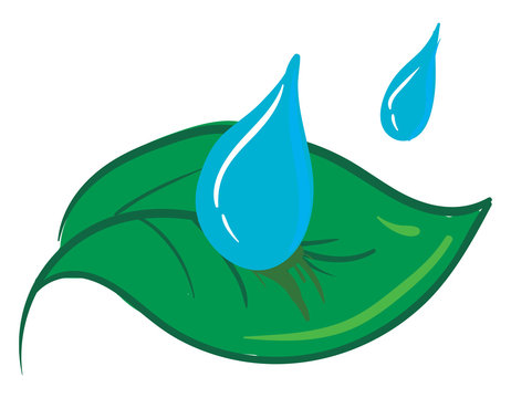 Clipart of two water drops falling on a green leaf vector or color illustration